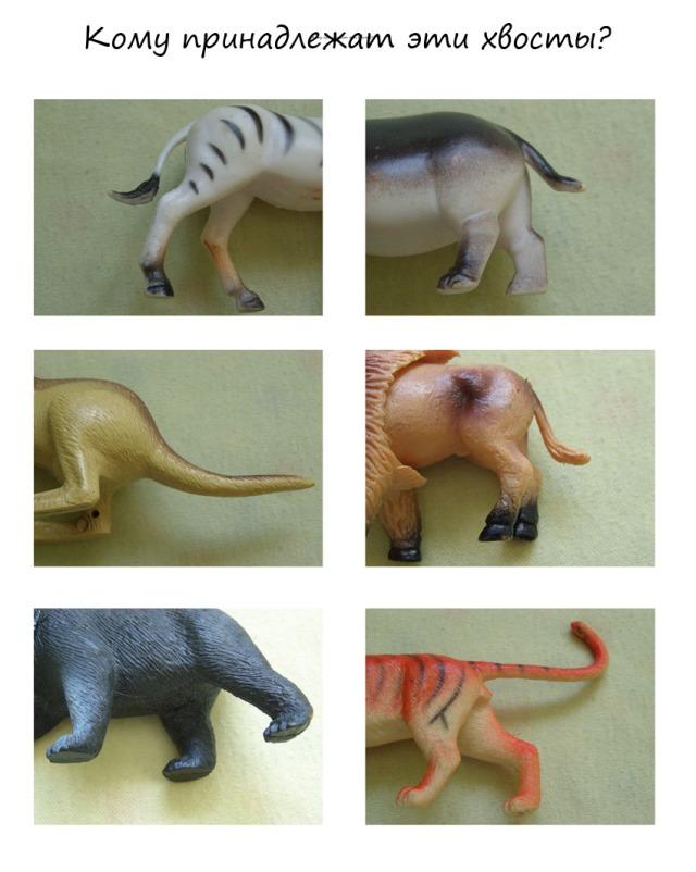 4 задание для зоопарка